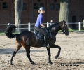 golden-dream-j-galop